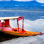 Shikara boat in Dal lake , Kashmir India