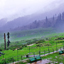 Gulmarg Morning View
