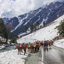 Caravan horses for carry travelers visit to mountain snow in Sonamarg
