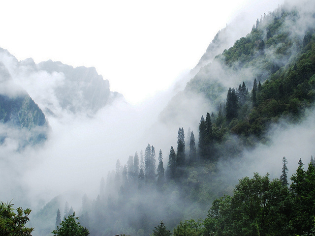 Misty Forest Near Ghangria