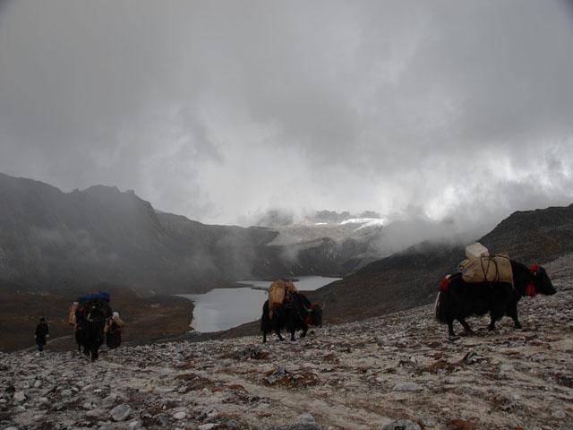 Yaks leaving Tshochen, Snowman Trek