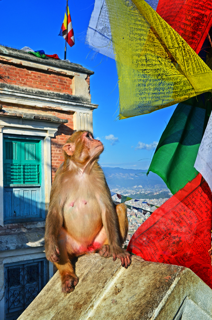 Prayer Flags and Monkey in Temple Grounds